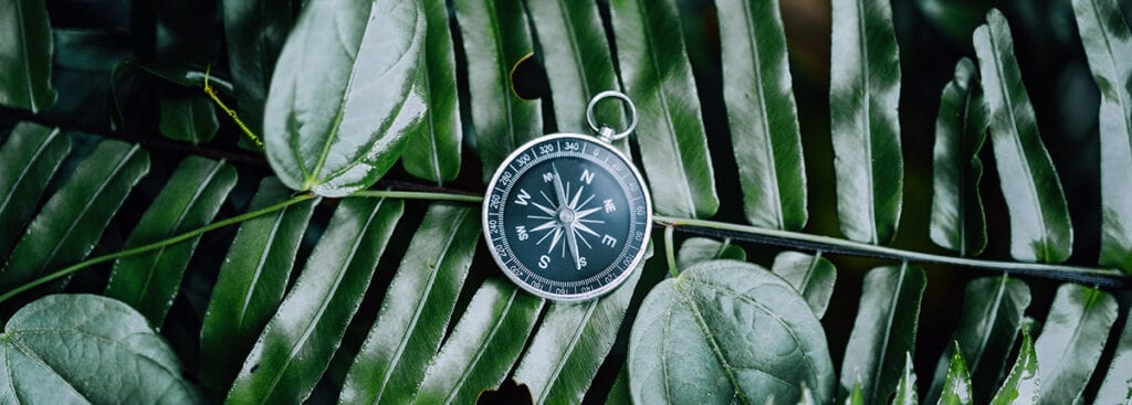 Picture of a compass guiding someone through the jungle of divorce